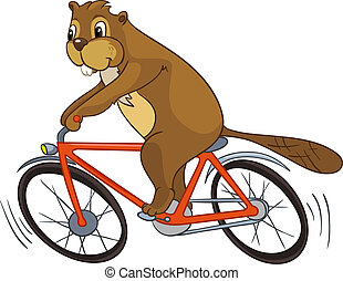 Beaver CREES Isolated on White Background. Look for Funny...