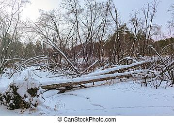 Beaver Dam in winter forest