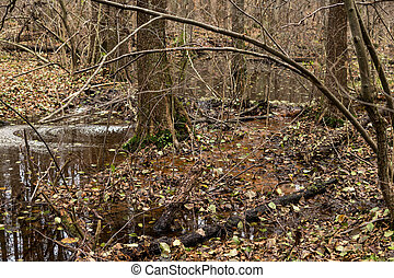 beaver dam on a small river