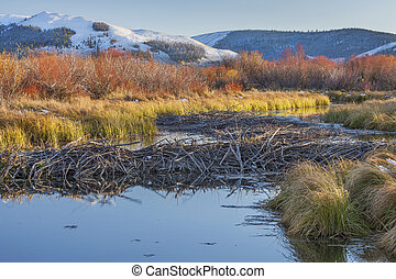 beaver dam on North Platte River above North Gate Canyon ...