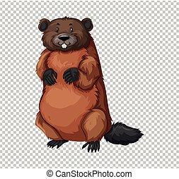 Beaver on transparent background