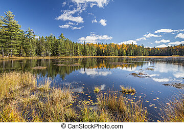 Beaver Pond in Autumn