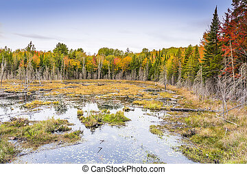 Beaver Pond in Autumn - Ontario, Canada