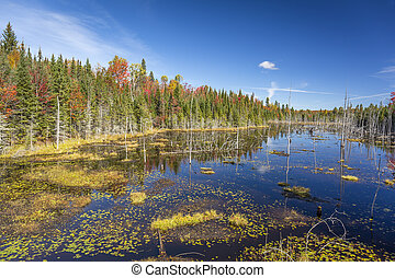 A beaver pond surrounded by the vibrant colors of a fall forest - Haliburton Highlands, Ontario, Canada