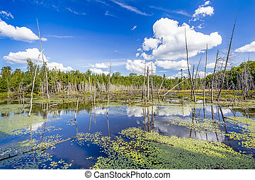 Beaver Pond with White Billowing Clouds Reflecting in the Water