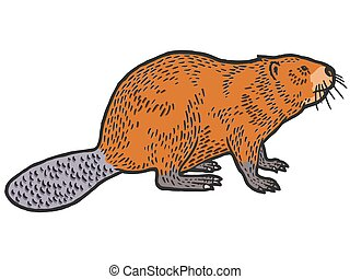 Beaver rodent mammal. Scratch board imitation. Color engraving vector illustration