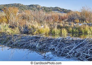 beaver swamp in Colorado
