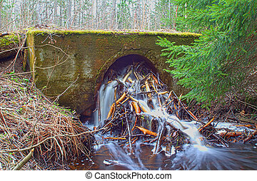 Beavers damage hydraulic engineering and road construction 1
