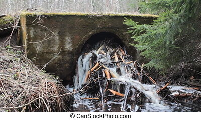 Beavers damage hydraulic engineering and road construction...
