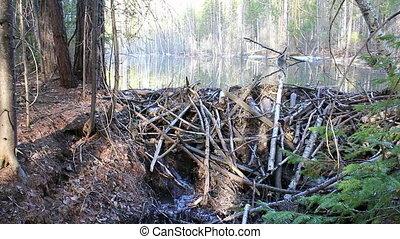 Beavers flooded the creek