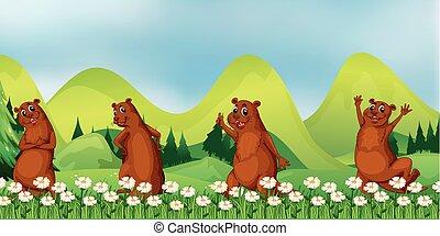 Beavers in the field