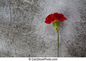 Beaytiful carnation flower on grey background. Top view