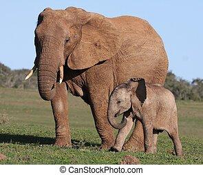 bebé, africano, mamá, elefante