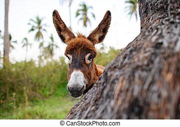 bebé, burro