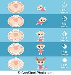 bebé, gráfico, dentición