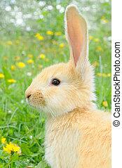 bebé, lindo, conejo