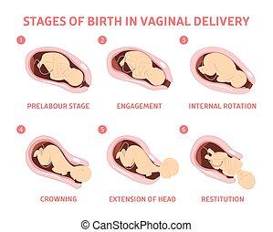 bebé, nacimiento, vaginal, etapas, entrega