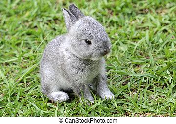 bebé, pasto o césped, conejo gris