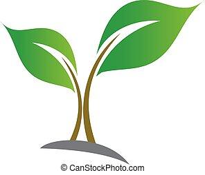 bebé, planta de semillero