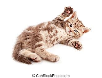 bebé, poco, espalda, acostado, gatito