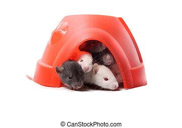bebé, ratas, plástico, cúpula