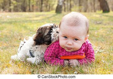 bebê, capim, filhote cachorro