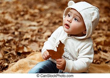 bebê, doce, floresta outono