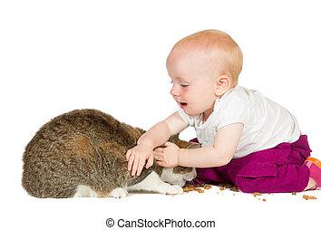 bebê, família jovem, gato
