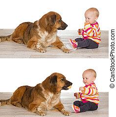 bebê, generoso, compartilhar, biscoito, cão