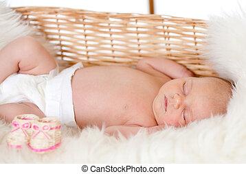 bebê recém-nascido, cesta, dormir