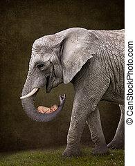 bebê, segurando, elefante
