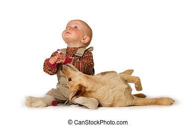 bebê, tocando, cão, jovem