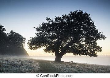 bedöva, dimmig, höst, falla, soluppgång, landskap, över,...