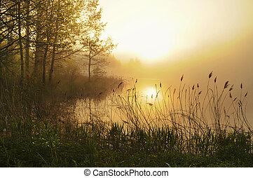 bedöva, dimmig, landskap
