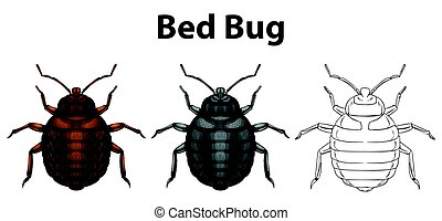 Bed bug in three sketches