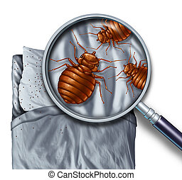 Bed Bug Infestation - Bed bug or bedbug infestation concept...