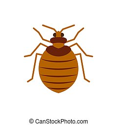 Bedbug insect pest single flat color vector icon