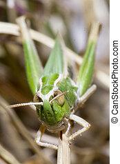 Bedbug sits on a branch.