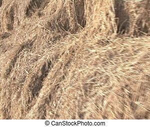 bedding farm animal straw - walking closeup of rolled straw...
