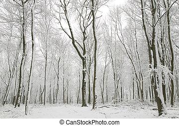 bedeckt, badehose, baum, schnee
