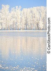 bedeckt, frost, winter- bäume