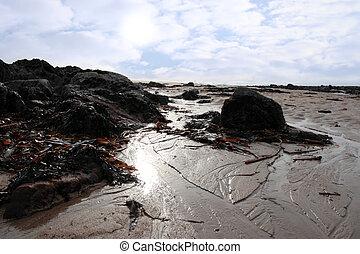 bedeckt, sandstrand, tang, steinen