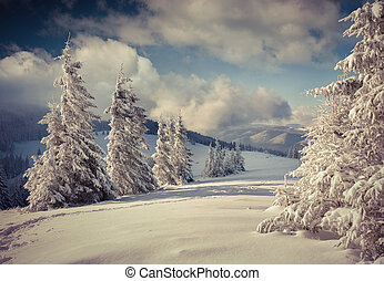 bedeckt, winter, schneelandschaft, bäume., schöne
