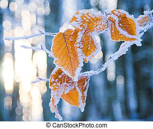 bedekt, bladeren, sneeuw