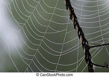 bedekt, dauw, spinnenweb