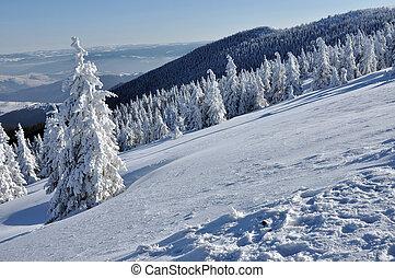 bedekt, landscape, winter bomen, sneeuw