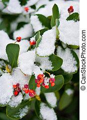 bedekt, plant, groene, sneeuw