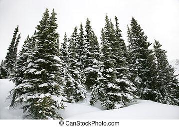 bedekt, sneeuw, dennenboom, bomen.