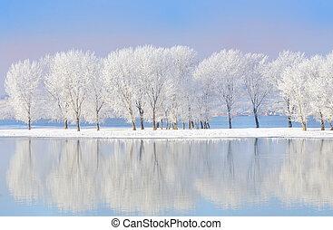 bedekt, vorst, winter bomen