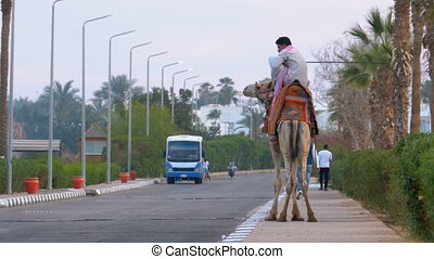 Bedouin Riding a Camel Stands on an Exotic Road with Palm...